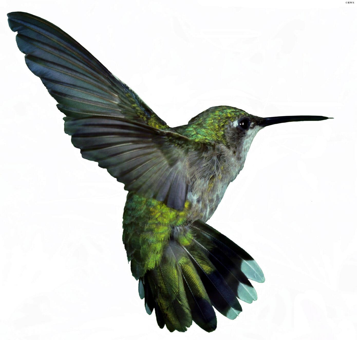 Google Hummingbird a great tool for social media marketing